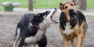 Algunas personas que adiestran a perros para peleas, suelen tenerlos encadenados y en jaulas. Foto:Pinterest