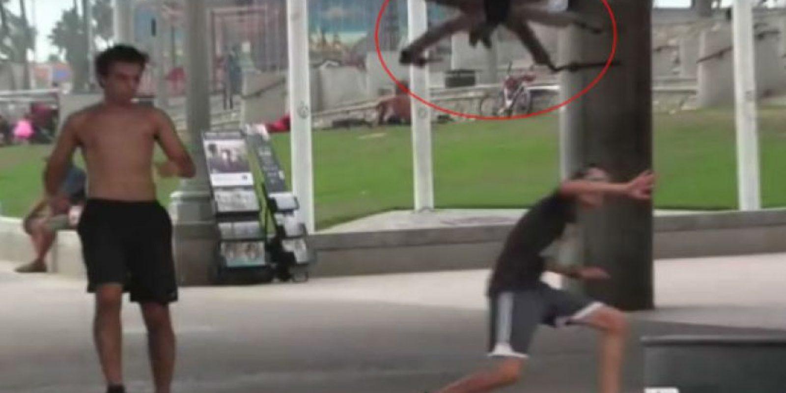 Así reaccionaban al ver esta inmensa araña. Foto:Vía Youtube