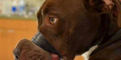 La dejaron así por dos días. Foto:vía Asociación de Animales de Charleston