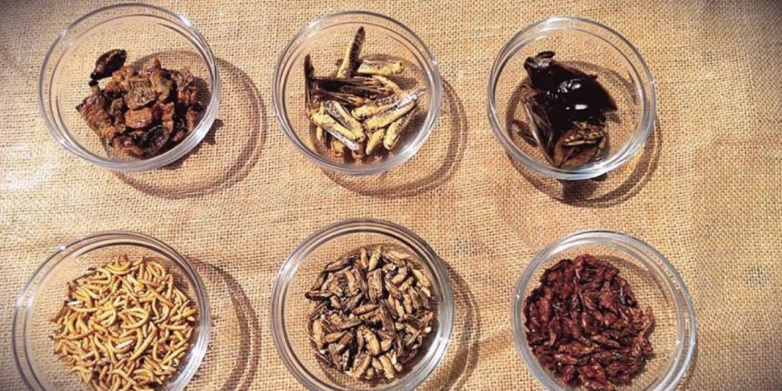Degustaciones de distintos insectos. Foto:Vía facebook.com/Grub-Kitchen