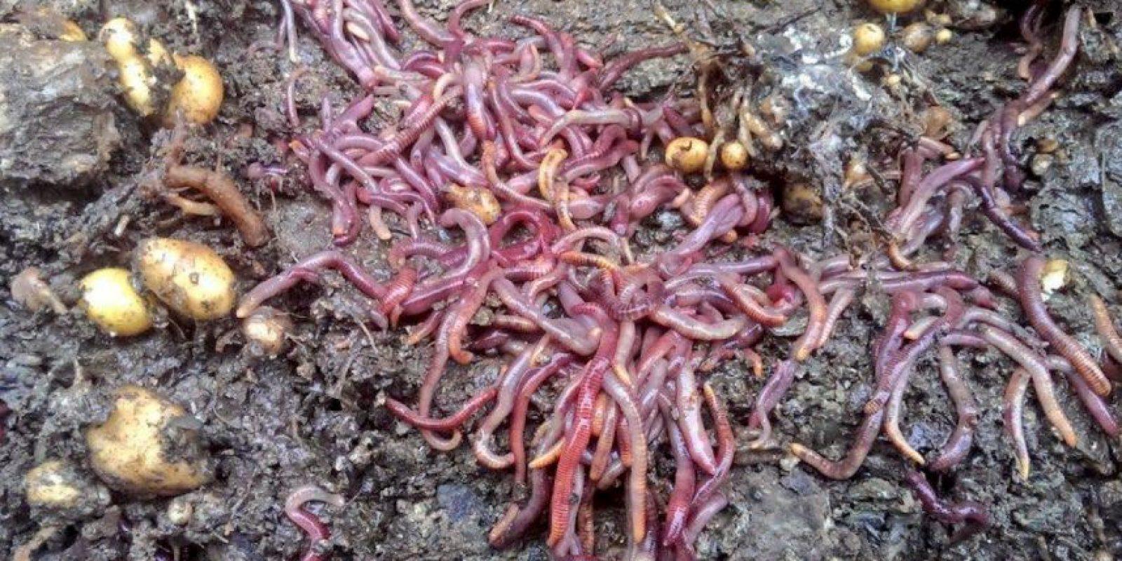 Ensalada de jardín Grub de hojas orgánicas, tomates locales y hierbas con granola insectos crujiente, queso de cabra y mermelada de balsámico. Foto:Vía Twitter @grub_kitchen