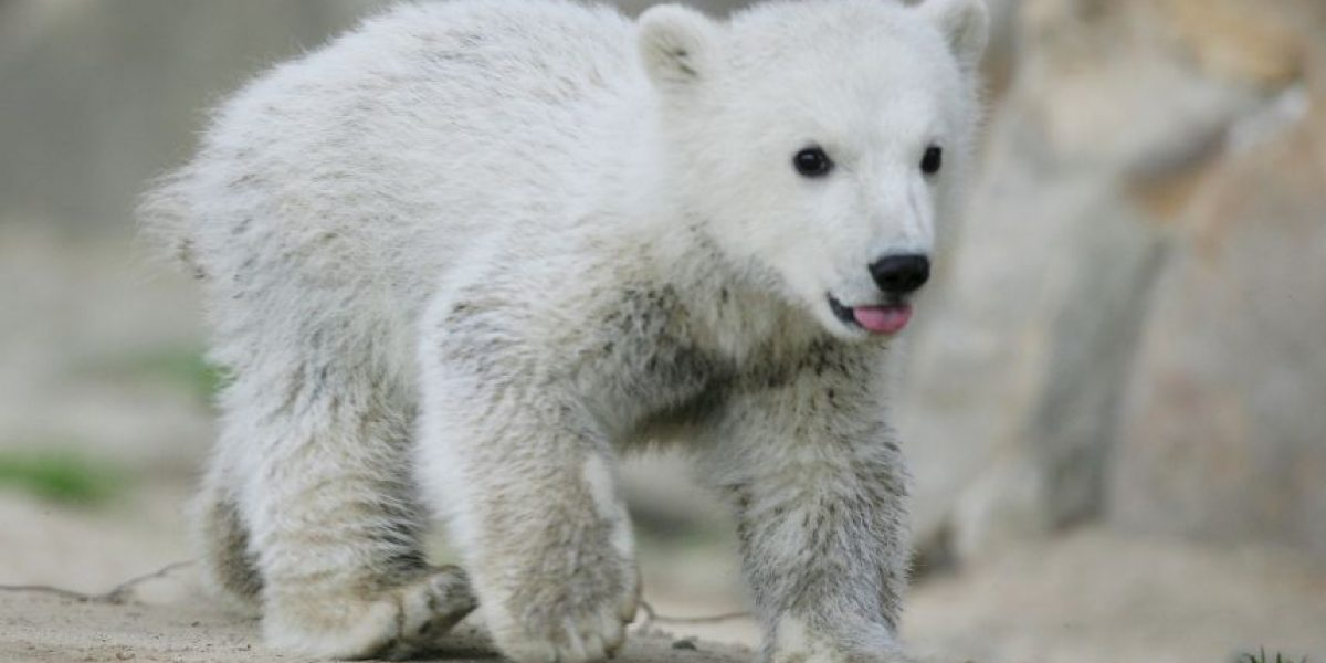Nueva teoría conspirativa: Investigadores aseguran que hay osos polares en Marte
