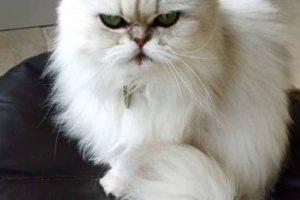 ¿Qué les parece su mirada? Foto:Vía Cats Protection's Ferndown Homing Centre