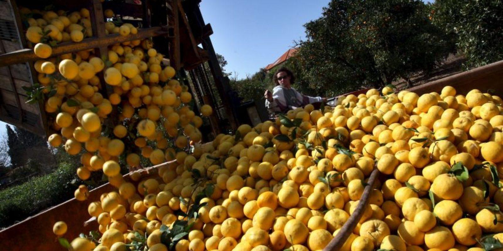 La mitad de un pomelo ofrece la mitad de las vitaminas diarias que un adulto promedio necesita. Este alimento podría interferir con medicamentos, se recomienda visitar al médico Foto:Getty Images