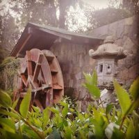 2. Jardín Japonés Foto:Instagram.com/tag/search/JardinJapones