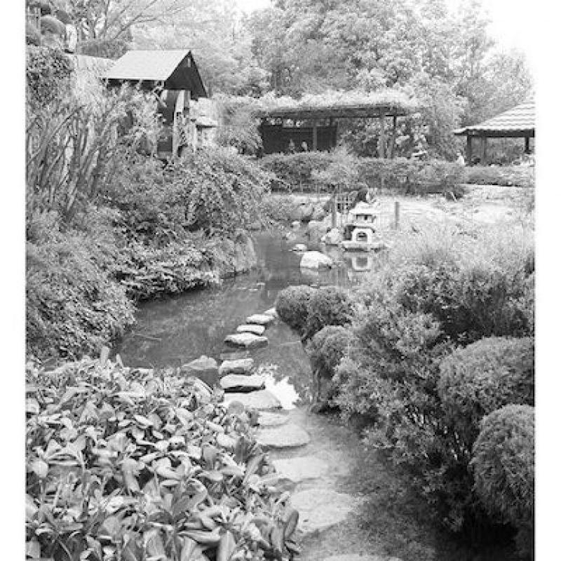 Llegar al lugar hará que valga el esfuerzo de la llegada Foto:Instagram.com/tag/search/JardinJapones