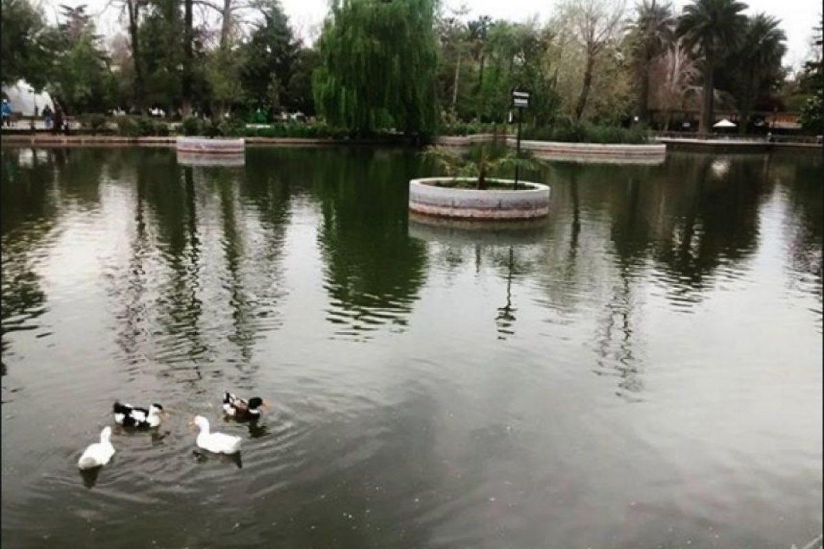 Incluso pueden navegar en sus botes Foto:Instagram.com/tag/search/ParqueQuintaNormal