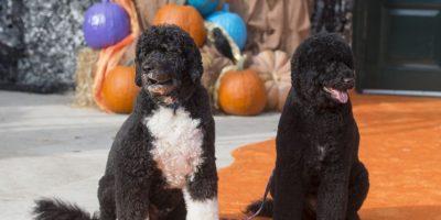 Sunny y Boo, los perros de la familia Obama Foto:AFP