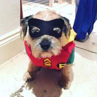 """Y así vistió a """"Bert"""" Foto:Instagram.com"""