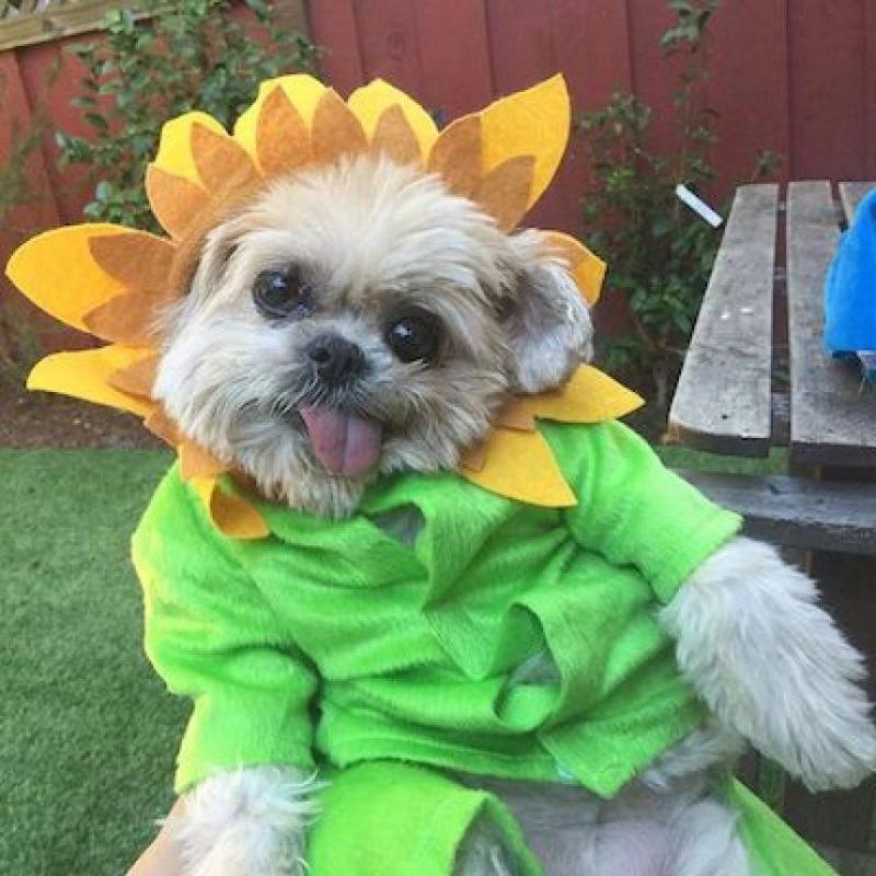 """""""Marnie The Dog"""", un perro celebridad de redes sociales. Foto:Instagram.com"""