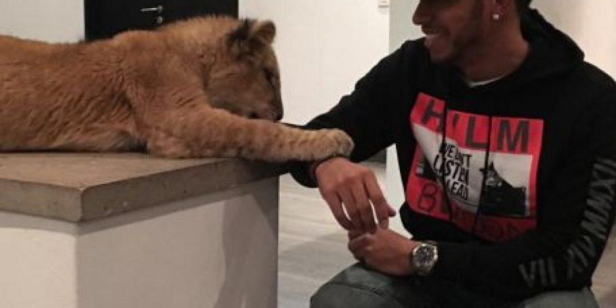 Fotos: Lewis Hamilton, campeón de la F1, se divierte con un león