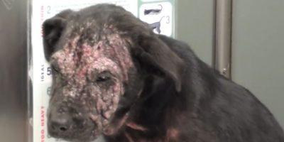 Su nombre es Krusty Kristy y se encontraba sin hogar cubierto de sarna. Foto:Vía Youtube