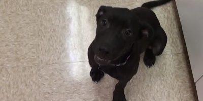 """El pequeño perro estaba programado para ser sacrificado. Sin embargo, la organización """"Vet Ranch"""" lo salvó. Foto:Vía Youtube"""