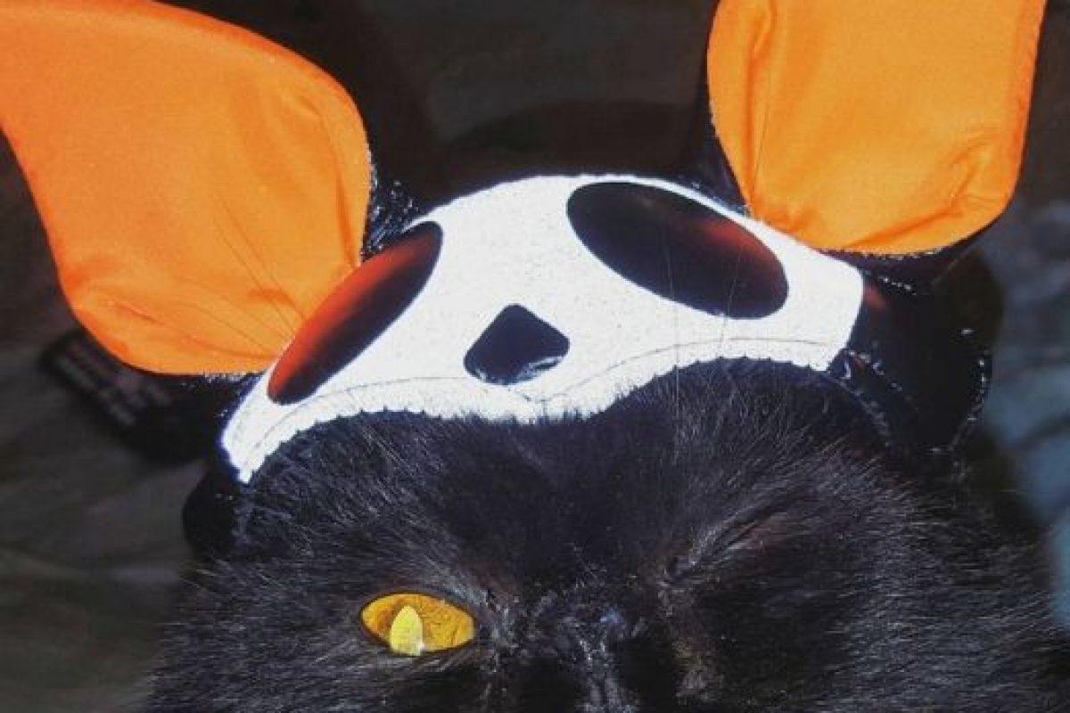 Este gato no está nada conforme con su atuendo. Foto:Vía Instagram