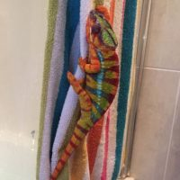 A continuación miren estos exóticos camaleones Foto:Vía Imgur