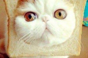 Estos gatos también pasaron por situaciones incómodas Foto:Vía Pinterest