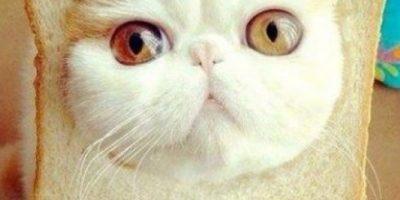 Video: Asustó a sus mascotas con extraña máscara y este fue el resultado