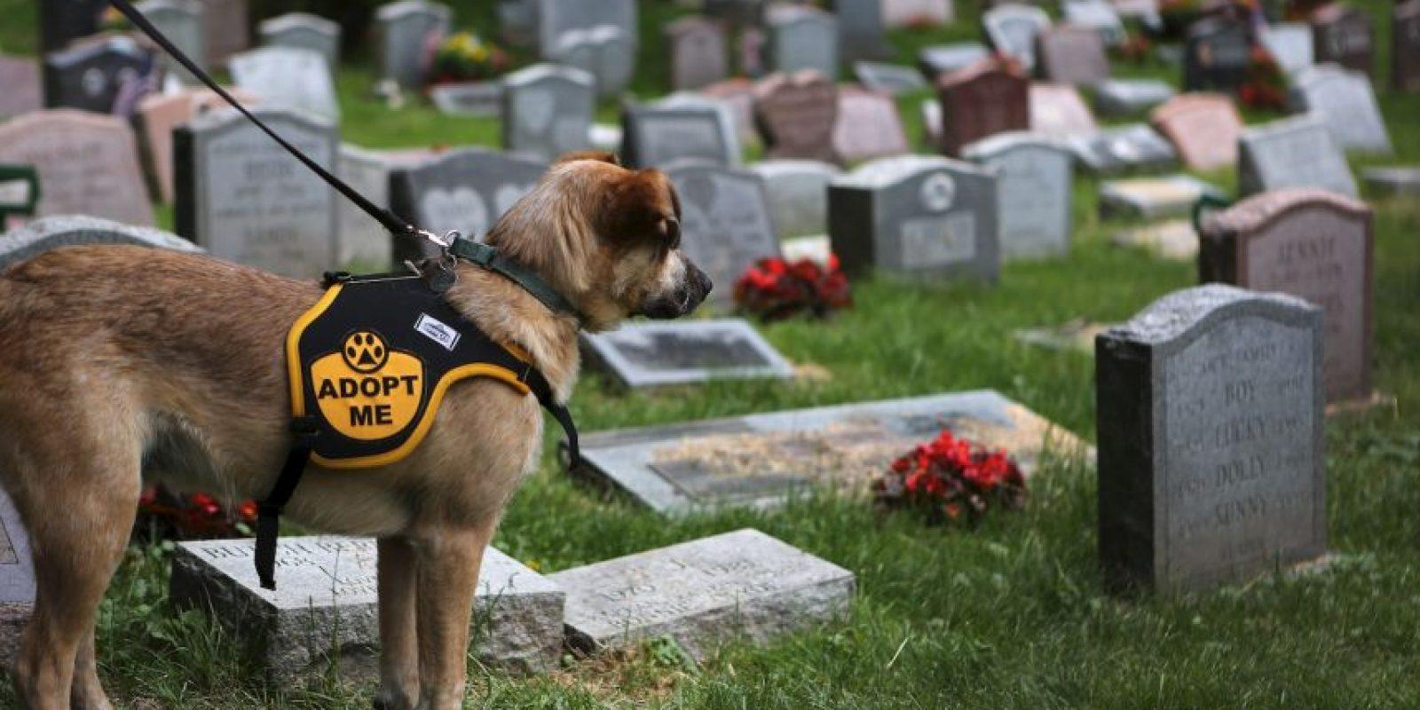 Aspectos a considerar antes de adoptar una mascota. Foto:Getty Images
