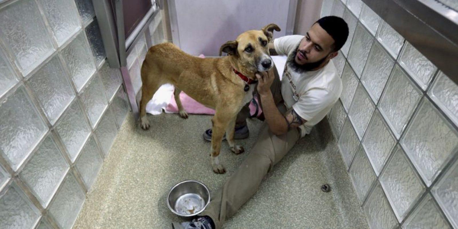 """""""Los perros y los gatos requieren mucho tiempo y dinero"""", explica la organización. Foto:Getty Images"""