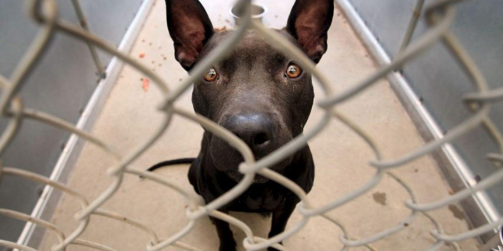 """""""Adoptar un perro o gato simplemente porque es lo que la gente 'hace' o porque los niños han estado llorando por un cachorro generalmente termina en un gran error"""", dice la organización de protección de animales. Foto:Getty Images"""