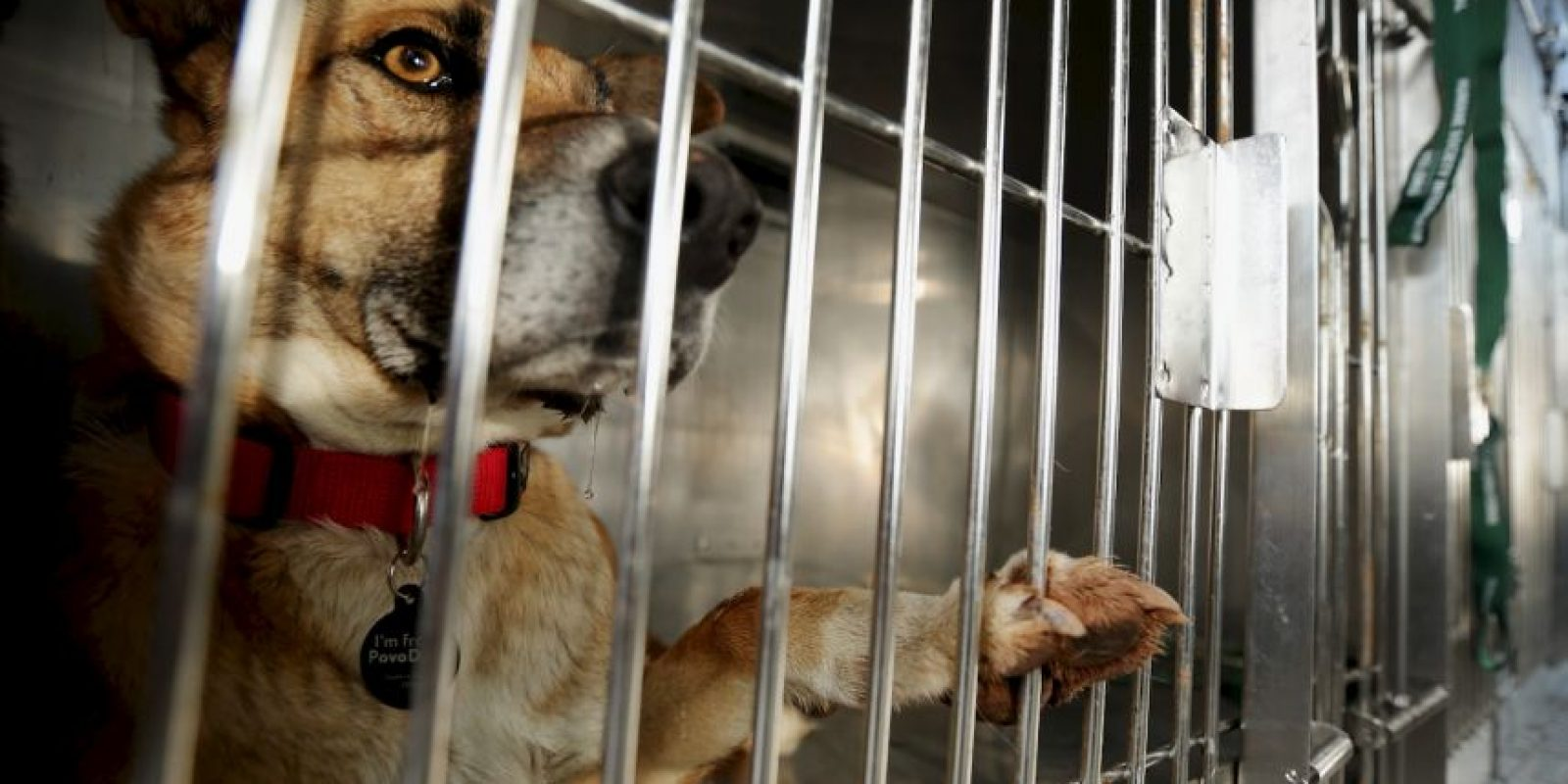 """""""Adoptar un perro o gato simplemente porque es lo que la gente """"hace"""" o porque los niños han estado lloriqueando por un cachorro generalmente termina en un gran error"""", dice la organización de protección de animales. Foto:Getty Images"""