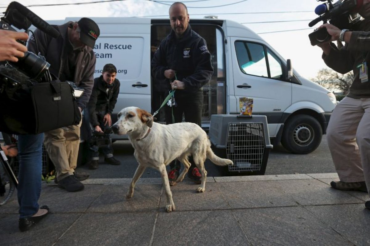 Las instituciones de defensa de animales sugieren tener en cuenta los problemas de salud provocados por pulgas u otros organismos. Foto:Getty Images