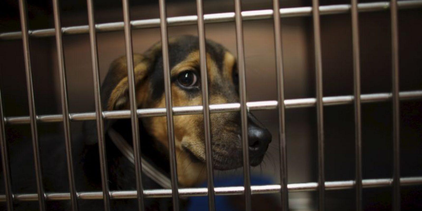 Las mascotas requieren comida, agua, ejercicio y compañía todos los días. Foto:Getty Images