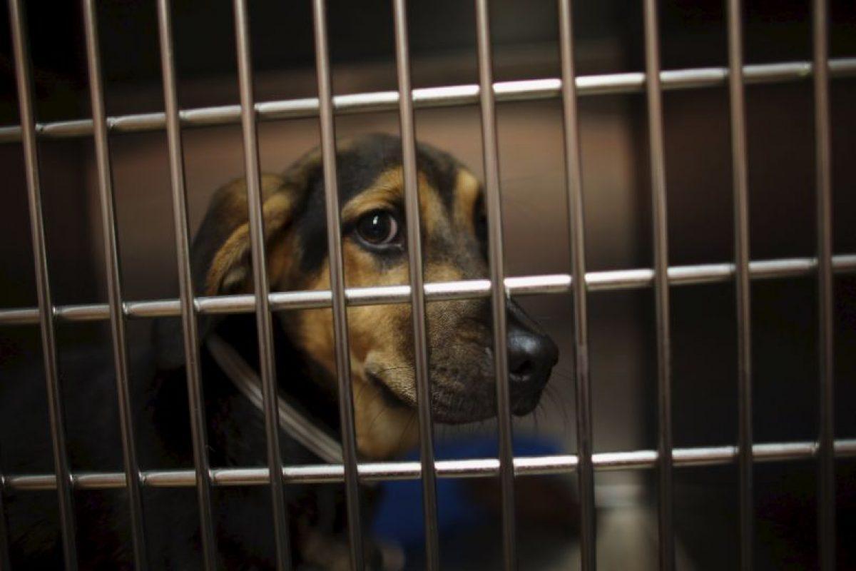 Su manutención puede tener costos muy elevados: visitas al veterinario, accesorios, comida, etcétera. Foto:Getty Images