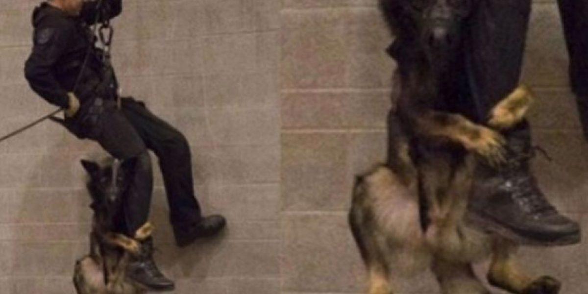 Perro policía muestra sus habilidades en Facebook