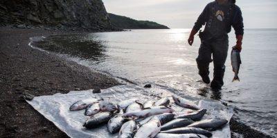 Una sustancia extraída de la vejiga de los pescados actúa como un agente en la aclamada ceveza de barril. Foto:Getty Images