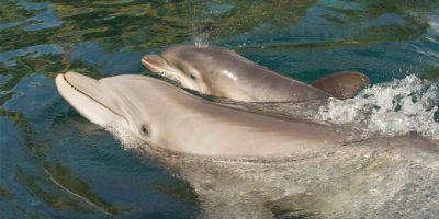 Las orcas no son los únicos animales marinos que forman parte de los espectáculos Foto:Vía facebook.com/SeaWorld