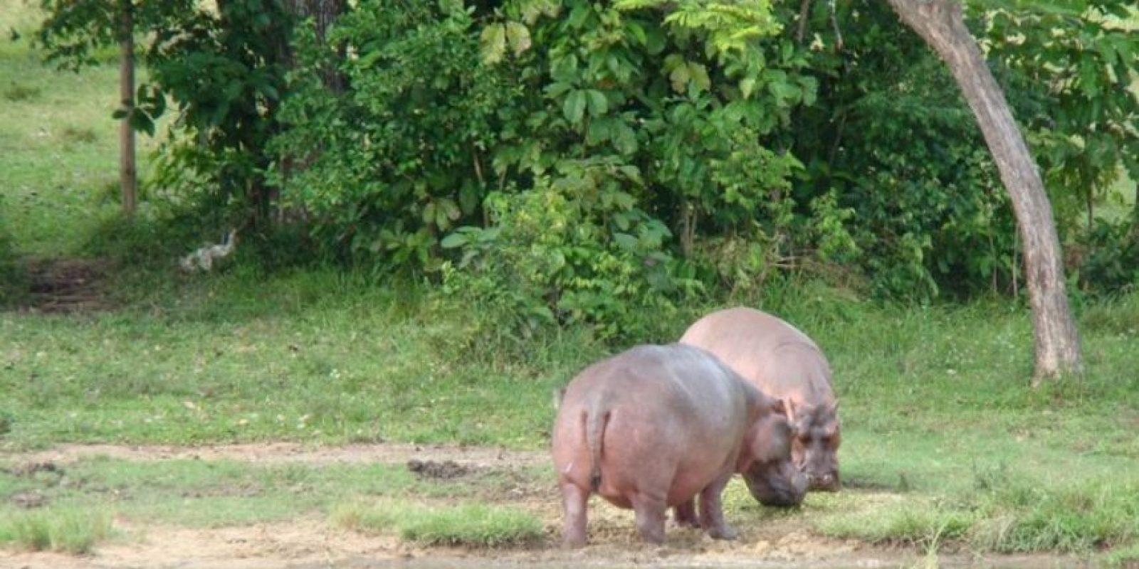 Únicamente se paga una entrada personal Foto:Vía haciendanapoles.com