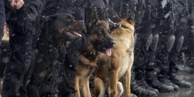 Canes le aciertan otro golpe al narcotráfico