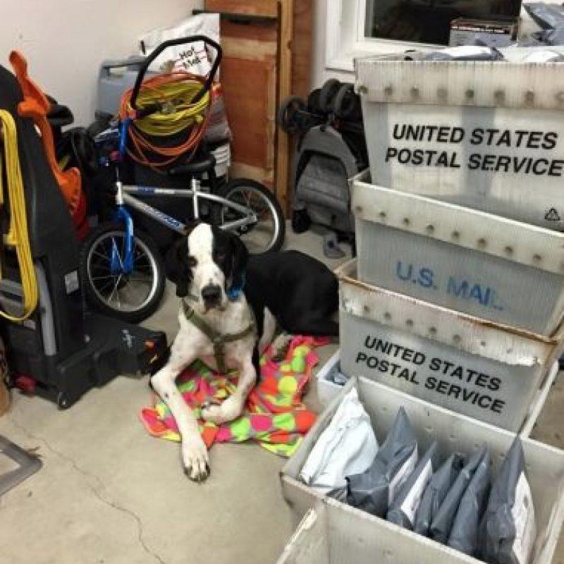 Actualmente George mide lo mismo que Bella, pero pesa tres veces más que ella, según informes del Proyecto de Servicios de Perros en Massachusetts. Foto:Vía Facebook/Bella and George