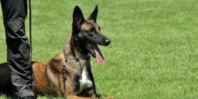 """Los perros entrenados para olfatear explosivos apoyarán el """"Plan Belén"""""""
