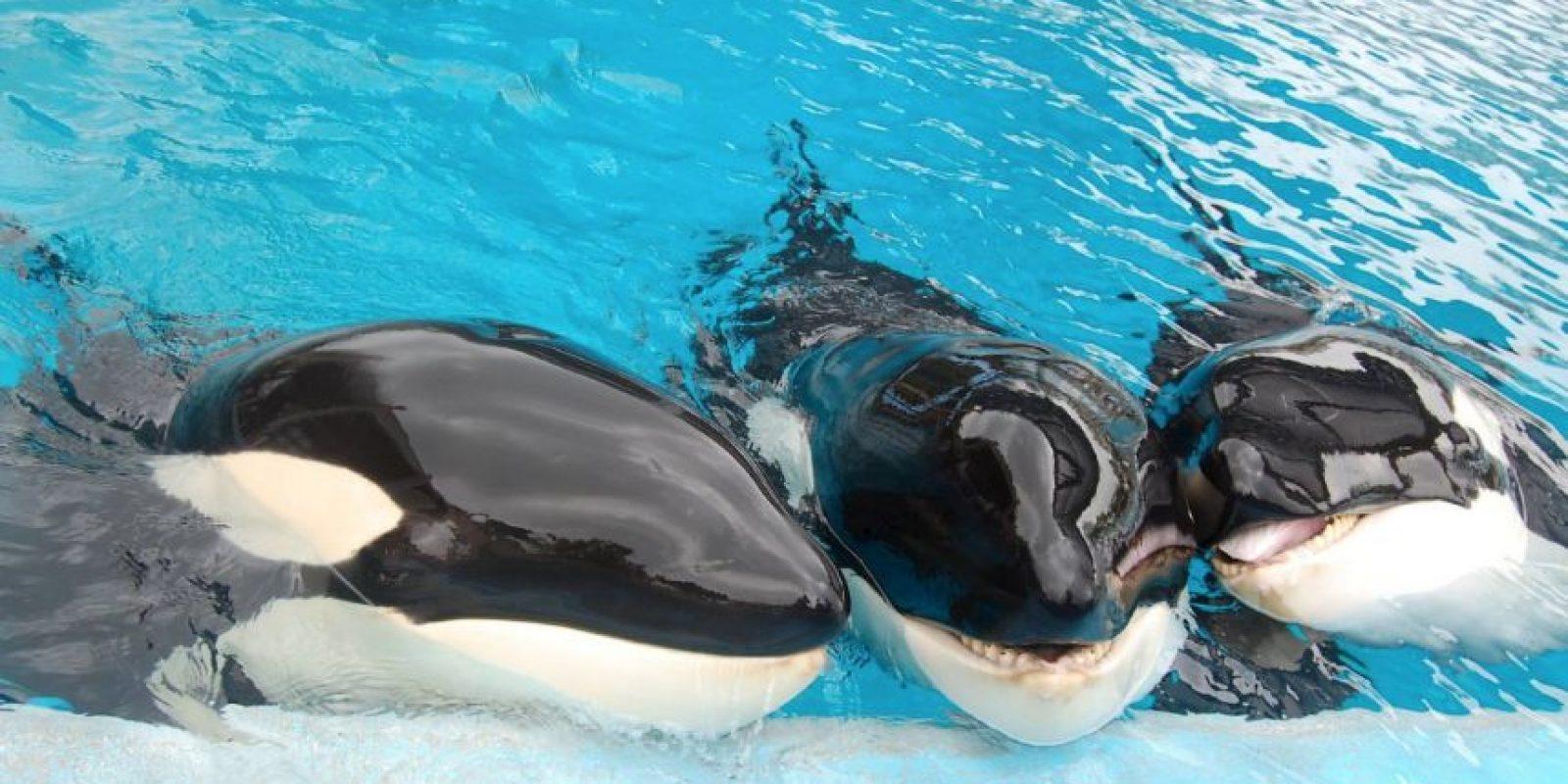 Aún se desconoce si la empresa terminará con estos shows en sus otros parques Foto:Vía Facebook SeaWorld