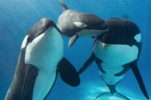 Estos animales llegan a medir 9 metros de largo. Foto:Vía Facebook SeaWorld