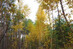"""Bosques que parecen """"encantados"""" Foto:Flickr"""