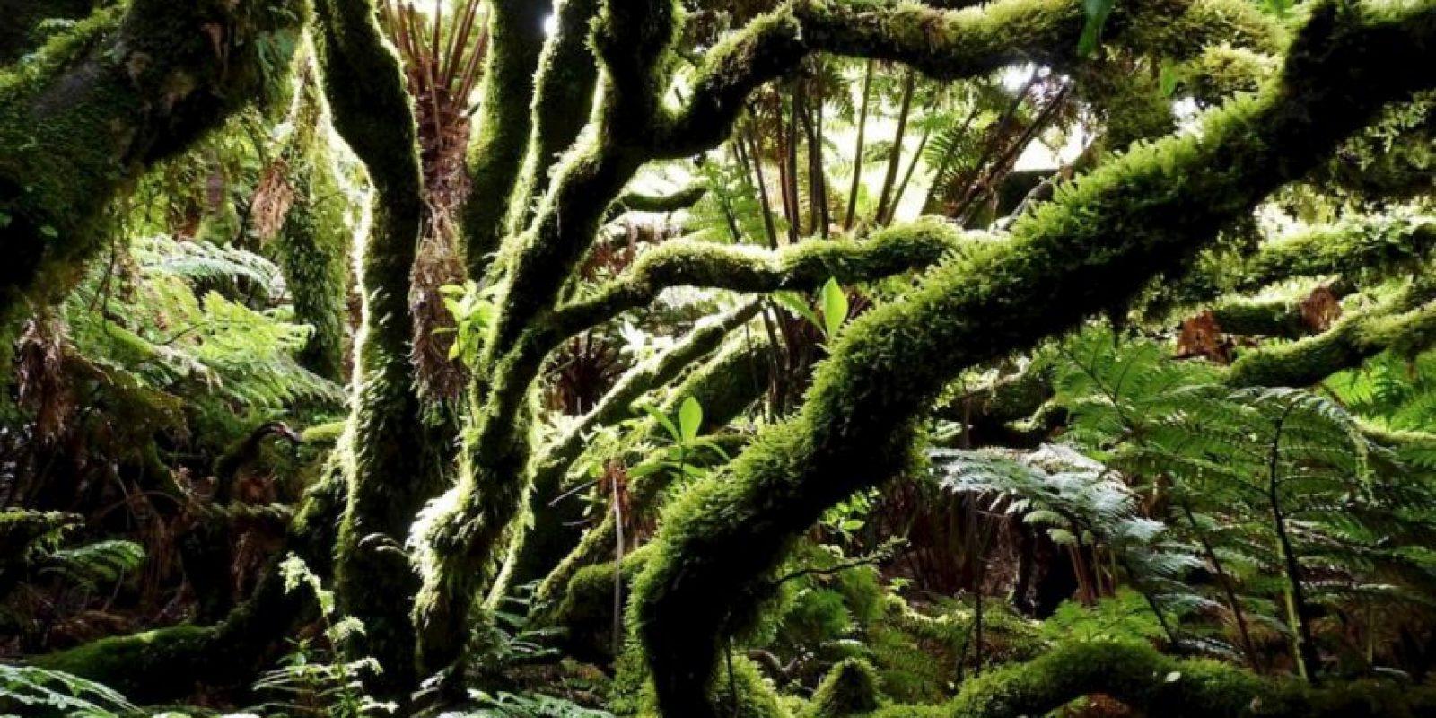 "Bosques que parecen ""encantados"" Foto:Pixabay"