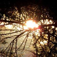 """A continuación: Bosques que parecen """"encantados"""" Foto:Pixabay"""