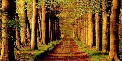 "Bosques que parecen ""encantados"" Foto:Tumblr"