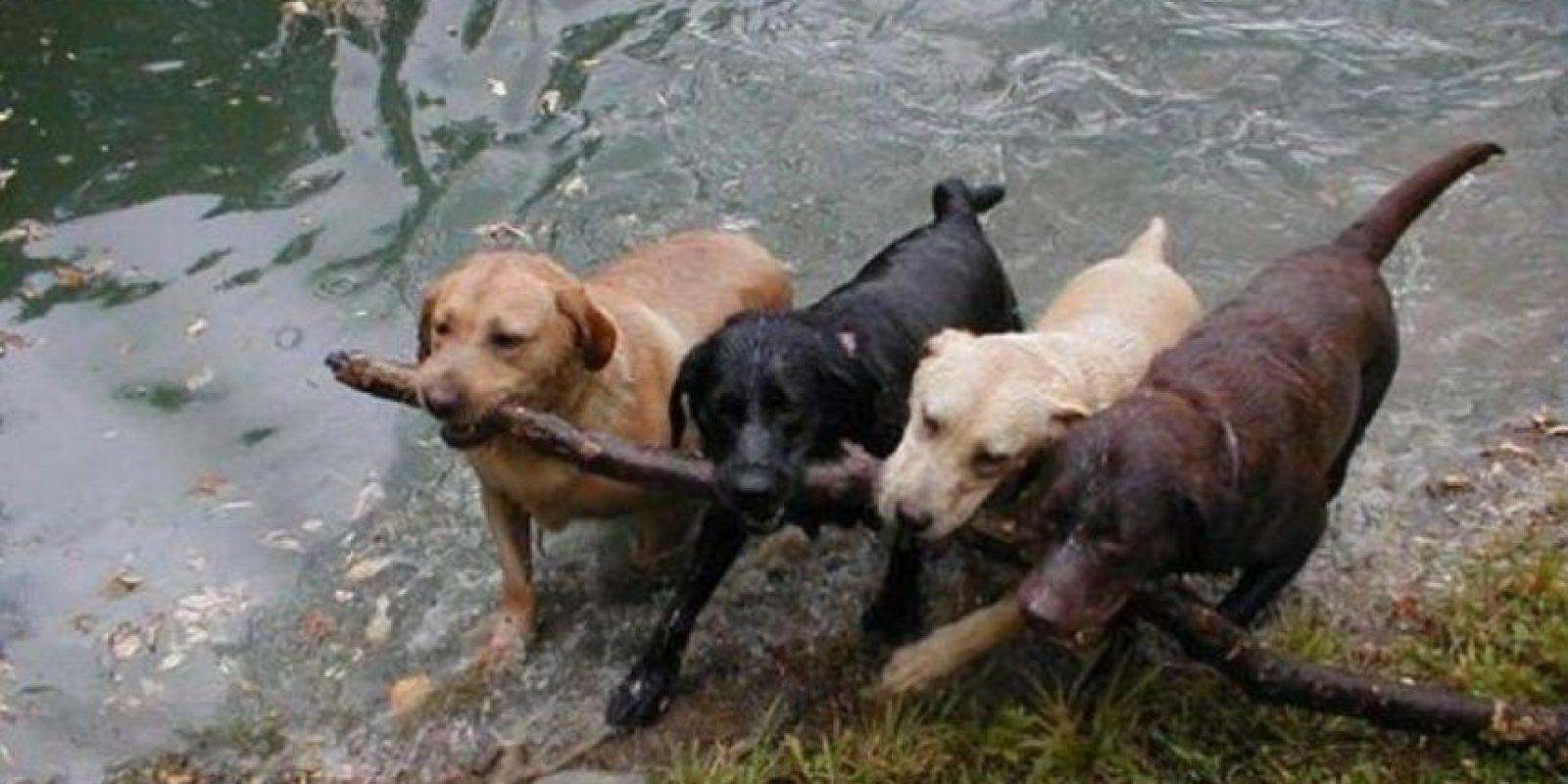 cachorritos en situaciones graciosas Foto:Tumblr