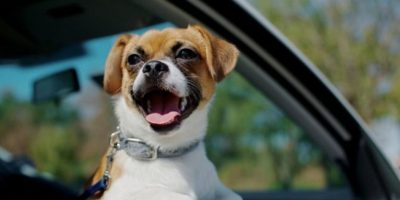 cachorritos en situaciones graciosas Foto:Pinterest