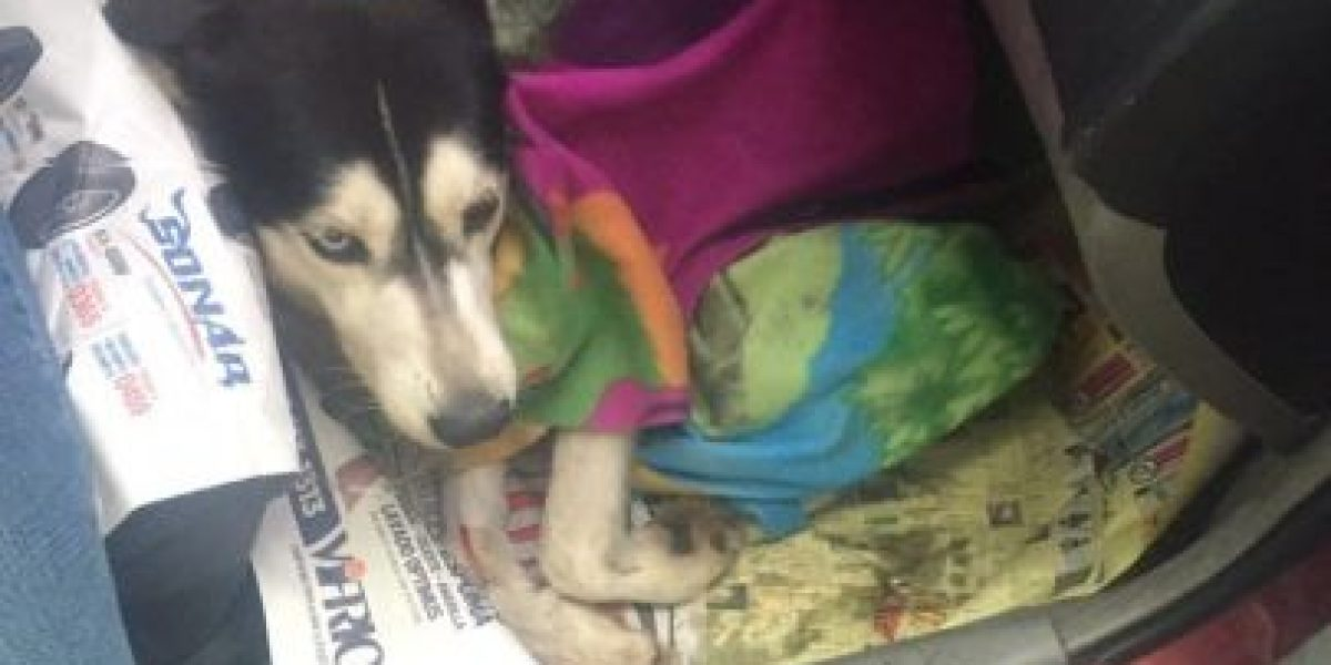 Uno de los cuatro perros envenenados con raticida ya fue dado de alta