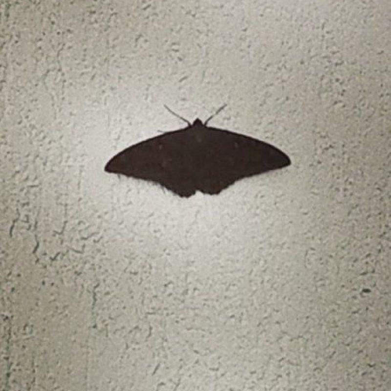 Que una mariposa negra entre en su hogar Foto:instagram.com/wilson.cardenass