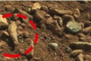 Un dedo fosilizado Foto: NASA