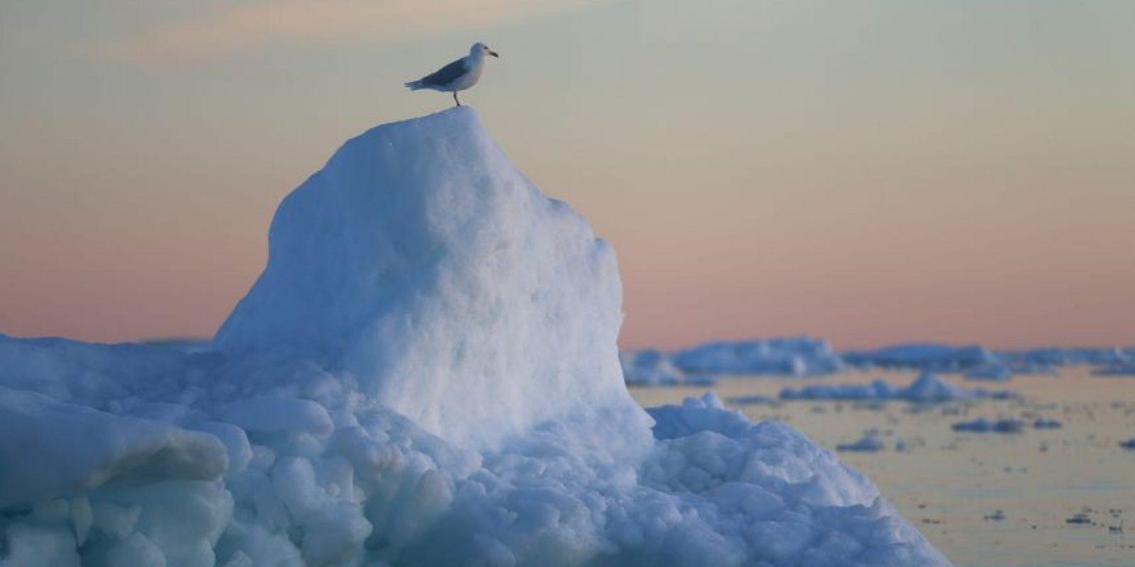 La NASA también analiza al glaciar Nioghalvfjerdsfjorden. Foto:Getty Images