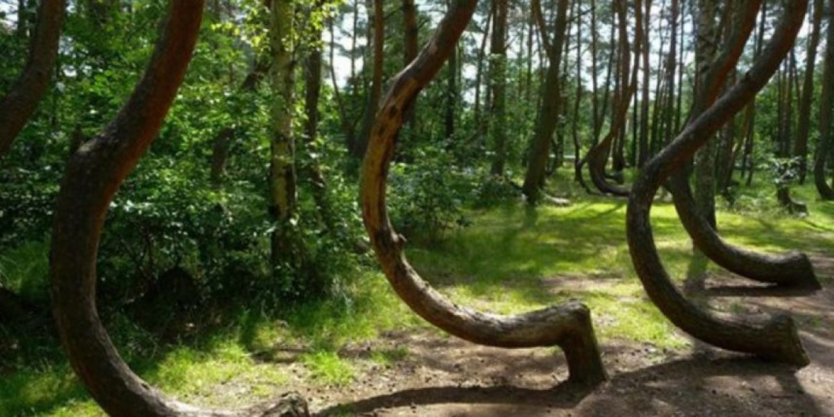 Bosque de 400 árboles es un misterio para la ciencia, descubran por qué