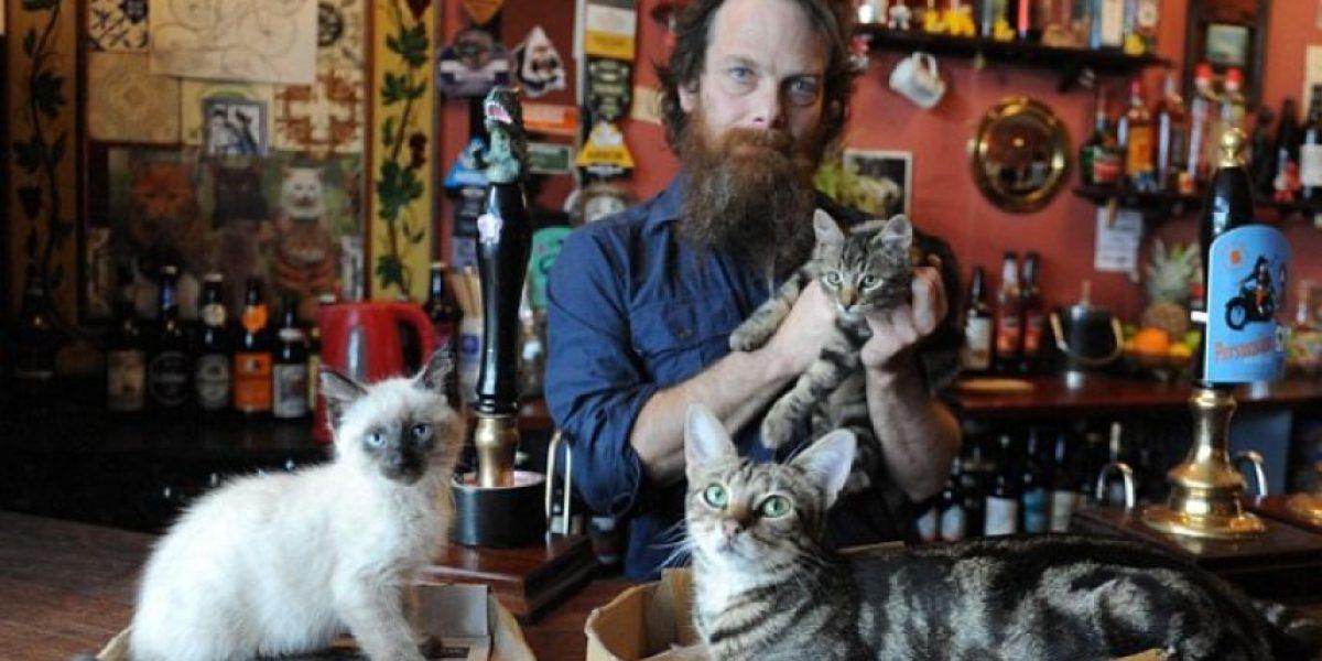 FOTOS. Un bar para los amantes de los gatos