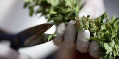Países en los que la marihuana está más cara Foto:Getty Images